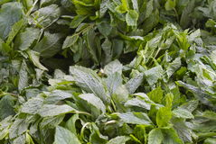 Herb mint leaves. In bunches at a fruit and vegetable stall in an open air market. Mint is used in salads, soups, sauces Royalty Free Stock Image