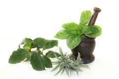 Herb Mix Fotografie Stock