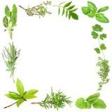 herb organiczne royalty ilustracja
