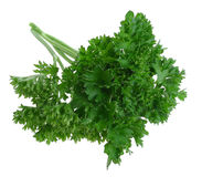 Herb parsley. Isolated on white royalty free stock image