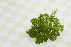 Herb Parsley on Green Checkered Background Stock Image