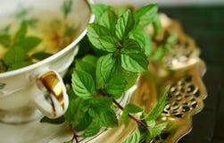 Herb, Plant