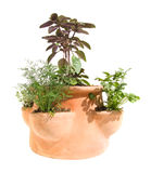 Herb planter. Small garden tricks - herb planter isolated on white stock images