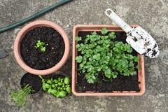 Herb planting Stock Image