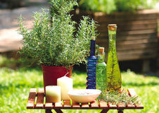 Herb plants and bottles Stock Photos