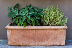 Herb plants royalty free stock image