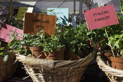 Herb plants for sale at the market royalty free stock photos