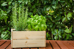 Herb Plants on a Wooden Table Outdoor Royalty Free Stock Image