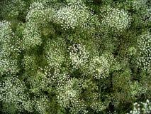 herb pola Fotografia Royalty Free