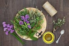 Herb Preparation med nya örter royaltyfria bilder