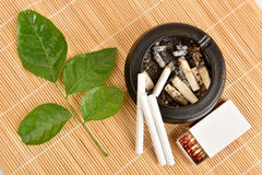 Herb for quit smoking Royalty Free Stock Image
