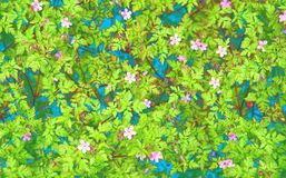 Herb robert wild flower background Royalty Free Stock Image