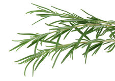 Herb rosemary isolated on white. A herb rosemary isolated on white Stock Image
