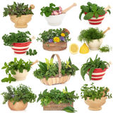 Herb Sampler. Large herb leaf selection over white background royalty free stock photography
