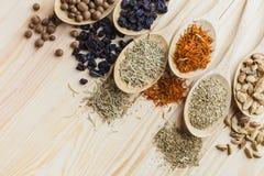Herb. Sandalwood papyrus echinacea remedy marigold natural stock image