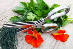 Herb Scissors Stock Photos