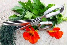 Herb Scissors Stock Photos