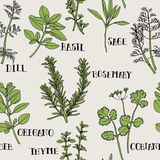 Herb Seamless Pattern. Herb Illustration. It's seamless pattern for repeat and continued Stock Photo