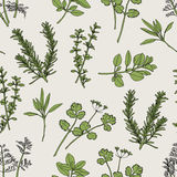 Herb Seamless Pattern. Herb Illustration. It's seamless pattern for repeat and continued royalty free illustration
