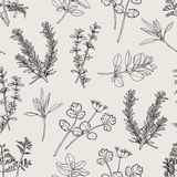 Herb Seamless Pattern Line Hand Draw. Herb Illustration. It's seamless pattern for repeat and continued stock illustration