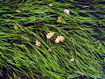Herb sedge in water Stock Images