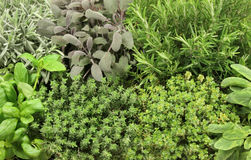Herb Selection Stock Photography