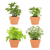 Herb Selection Royalty Free Stock Photography