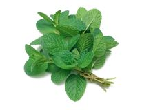 Herb Series Common Mint Royalty Free Stock Photo
