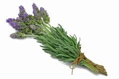 Herb Series Lavender Royalty Free Stock Image