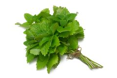 Herb Series Lemon Balm Royalty Free Stock Photos