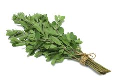 Herb Series Marjoram. Sweet Marjoram (herb) tied in a bunch with twine, isolated on white stock photo