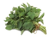 Herb Series Oregano Royalty Free Stock Photos