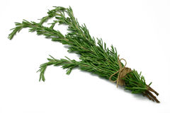 Herb Series Rosemary Stock Images
