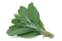 Herb Series Sage. Sage (herb) tied in a bunch with twine, isolated on white stock photo