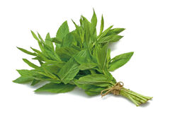 Herb Series Spearmint Stock Photo