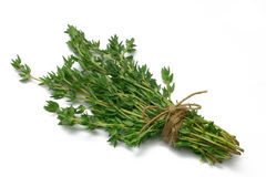 Herb Series Thyme royalty free stock photo
