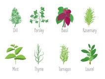 Herb Set Dill, persil, Basil, menthe, Rosemary, laurier et thym Vecteur Image libre de droits