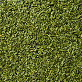 Herb, spice. Spice, multitude of cutted herbs Royalty Free Stock Images