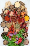 Herb and Spice Seasoning royalty free stock images