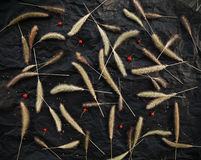 Herb spikelets and red berries on black background. Herbarium pattern stylish design Royalty Free Stock Images