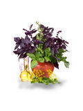 Herb still life Royalty Free Stock Images