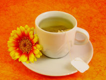 Herb tea. With Daisy Gerber on orange backround royalty free stock photography