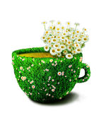 Herb tea cup from grass and flowers Royalty Free Stock Photos