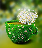 Herb tea cup from grass and flowers Royalty Free Stock Image