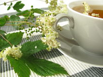 Herb tea with meadowsweet. Cup of herb tea with meadowsweet Royalty Free Stock Photos
