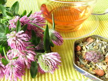 Herb tea with red clover. Cup of herb tea with red clover royalty free stock photo