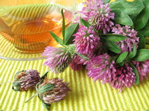 Herb tea with red clover Stock Image