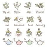 Herb, teacup and teapot icon set Stock Photo