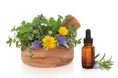 Herb Therapy Royalty Free Stock Photography