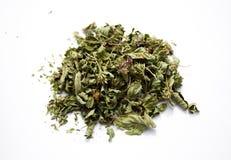 Herb-thyme Stock Photo
